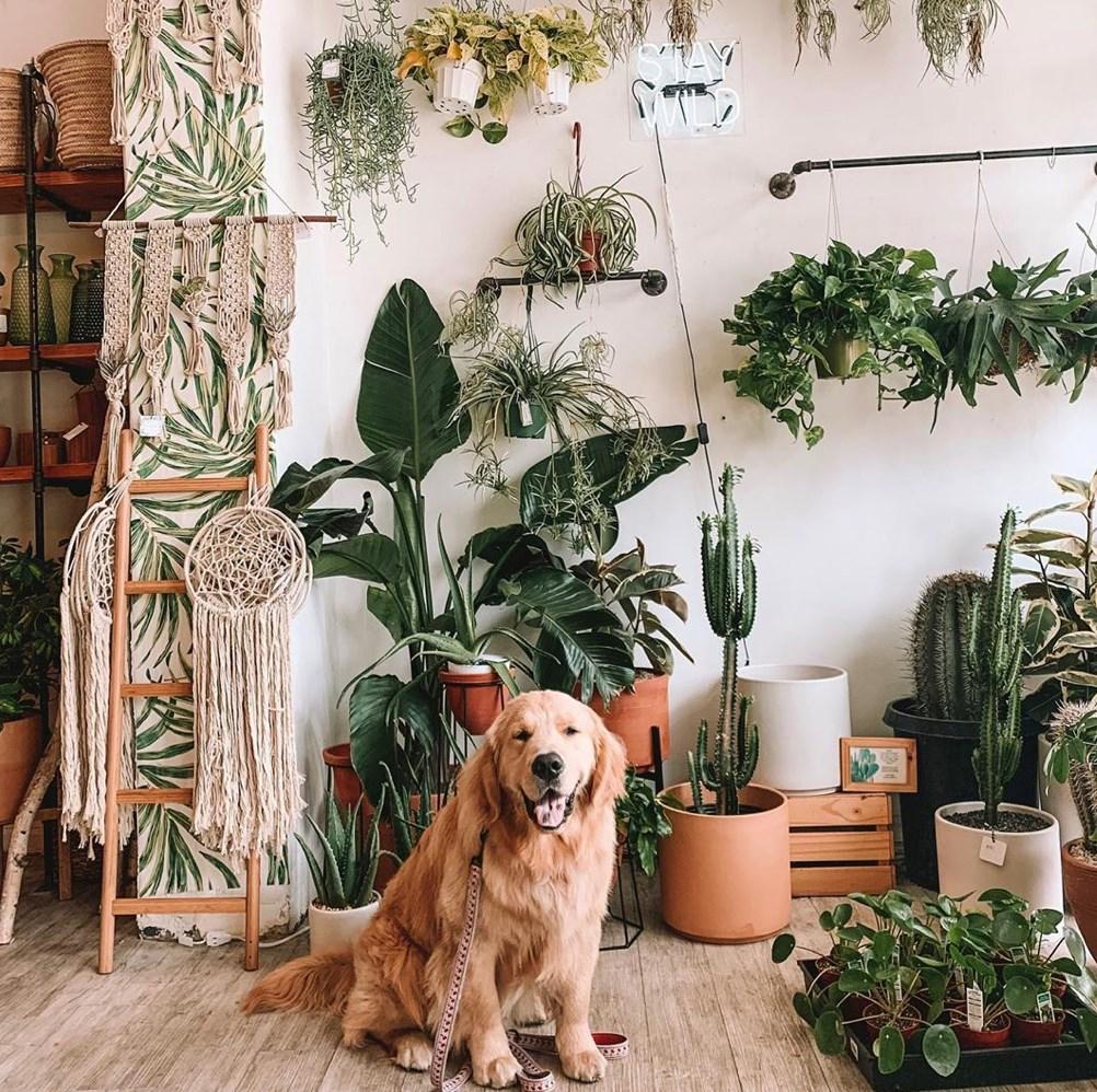 Get pet friendly plants online