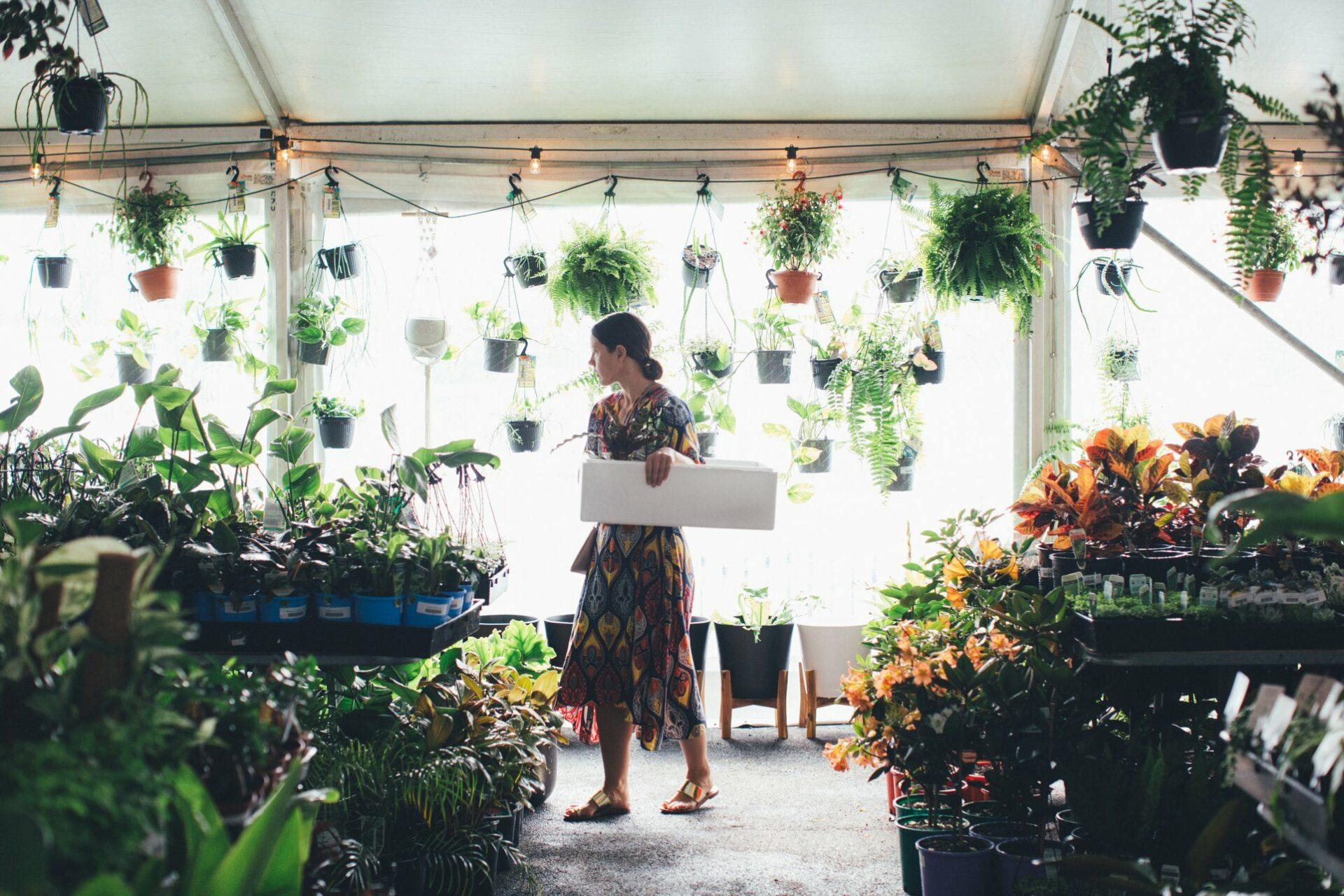 Brisbane Indoor Plant Sale