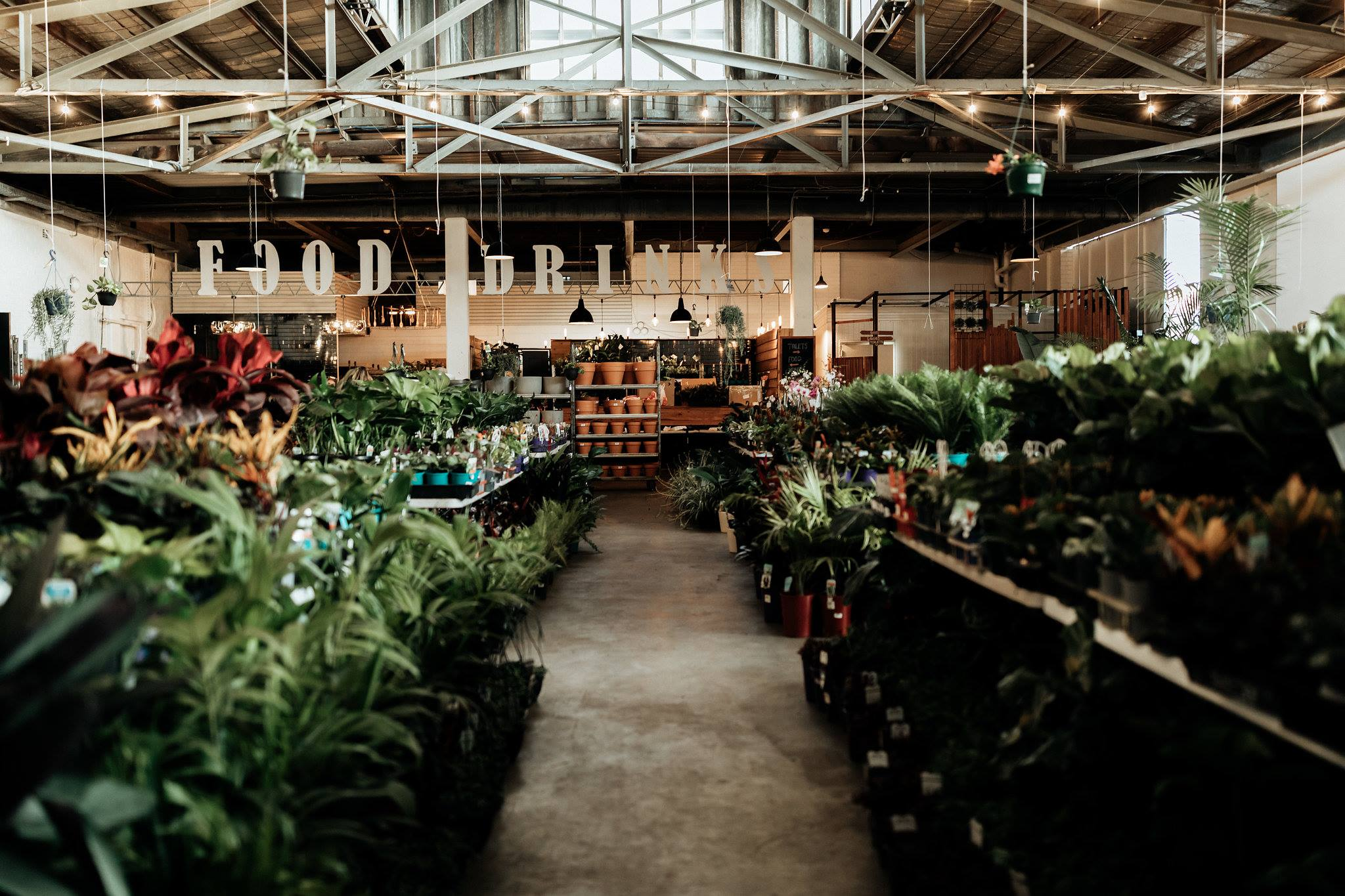 Plant Sale for Online - Perth