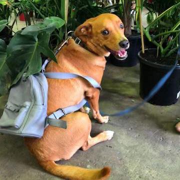 Pet Friendly Online Plants